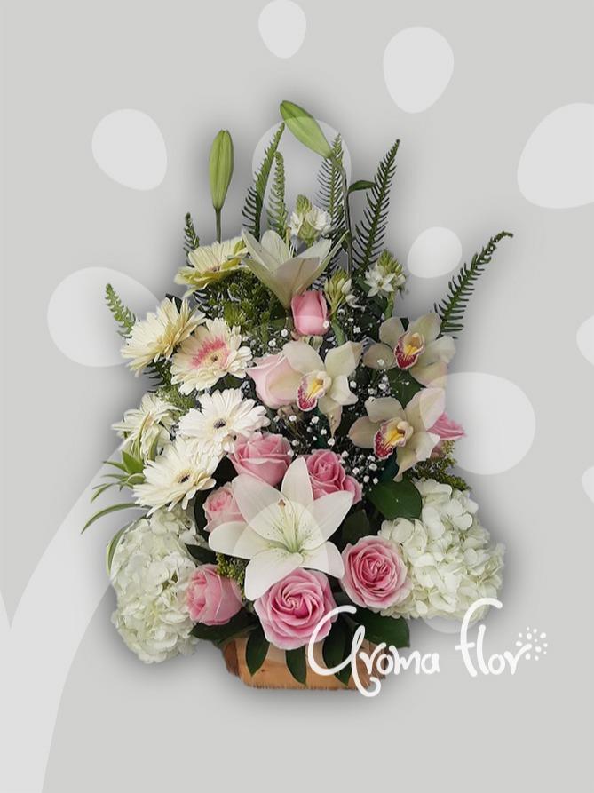 Orquídeas Rosas Rosada