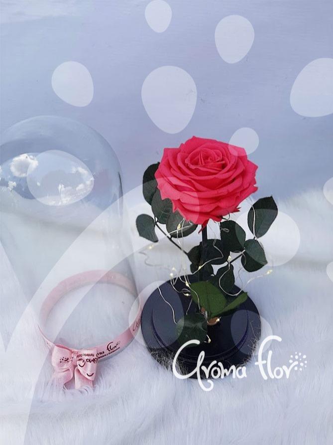 Rosa Inmortalizada rosada