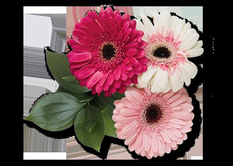 floristeria aromaflor
